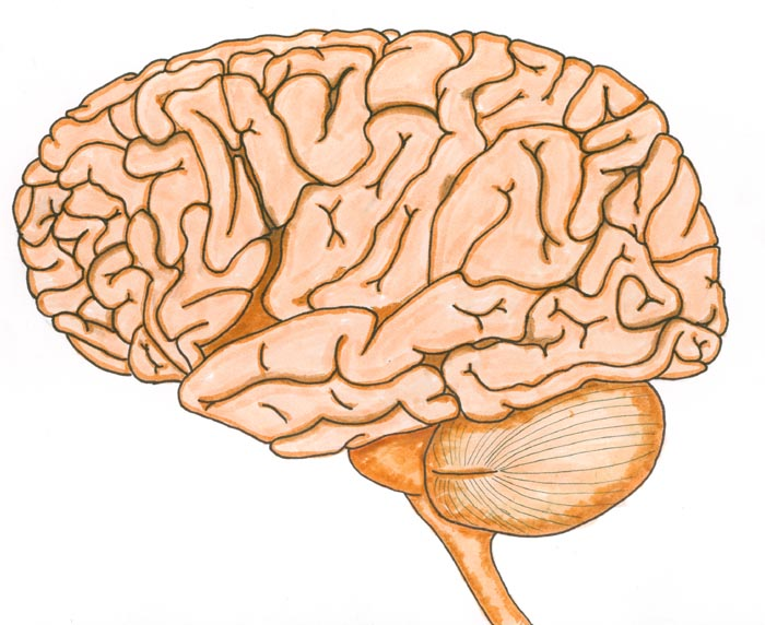 The awesome Human Brain!