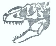 Allosaurus skull