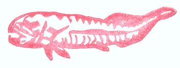 Armorfish