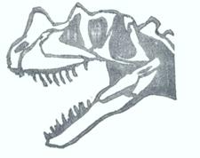 Carnosaur skull