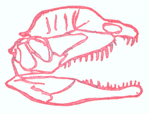 just the skull