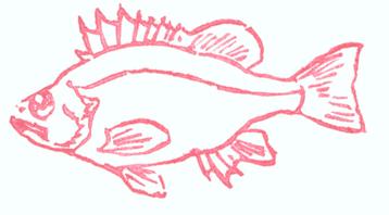 Just a Fish
