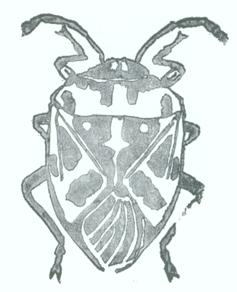 A real bug!